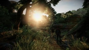 tlour_forest