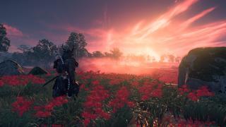 Jin, équipé d'une imposante armure, marche dans un champ de fleurs rouges en direction d'un magnifique coucher de soleil qui colore les nuages.
